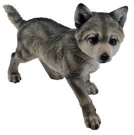 Wolf-Welpe laufend grau