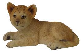 Löwen-Junge