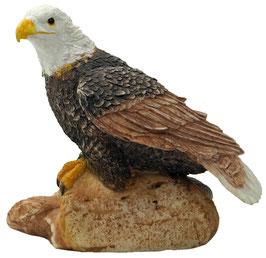 Adler sitzend