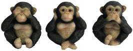 Schimpanse die drei Weisheiten