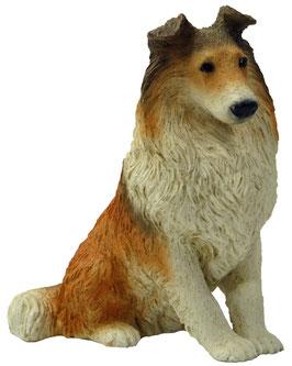 Hund - Collie sitzend