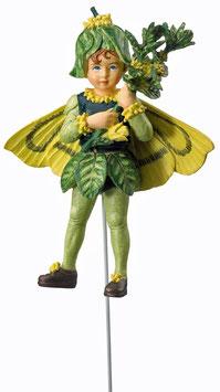 Flower Fairy - Buchsbaum