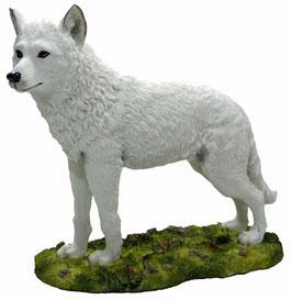 Wolf stehend weiss