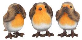 Vögel die drei Weisheiten