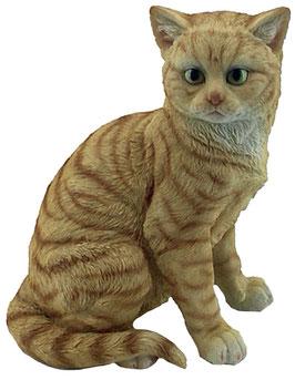 Katze sitzend rot