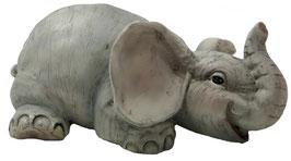 Elefant auf Bauch