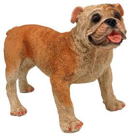 Hund - Bulldogge stehend