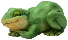 Frosch auf Bauch