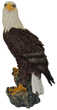 Adler auf Fels