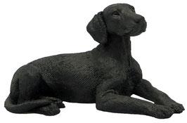 Hund - Labrador liegend