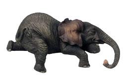 Elefant liegend Kante