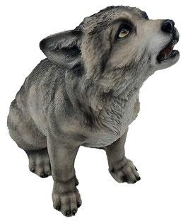 Wolf-Welpe heulend grau