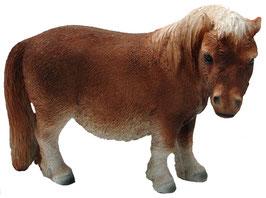 Pony stehend braun