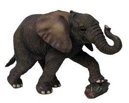 Elefant stehend mit Stein