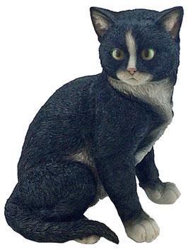 Katze sitzend schwarz