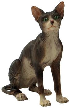 Katze Sphinx