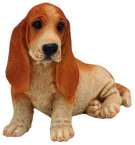 Hund - Basset sitzend