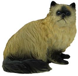 Katze Himalayan Perser