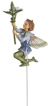 Flower Fairy - Immergrün