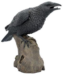 Rabe sitzt auf Baumstrunk