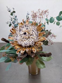 Protea ausganiert