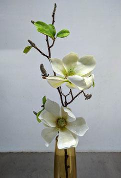 Magnolie Blüte