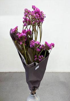Stadicen lila