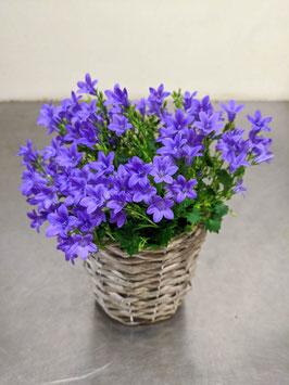 Glocken   Blume