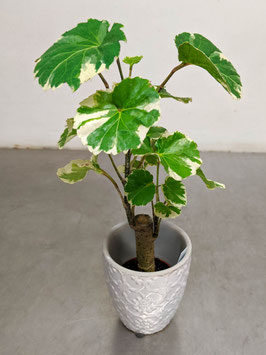 Minibaum