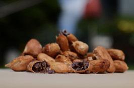 NEU - Kakaobohnen mit Fruchtfleisch - Rohkost aus Vietnam