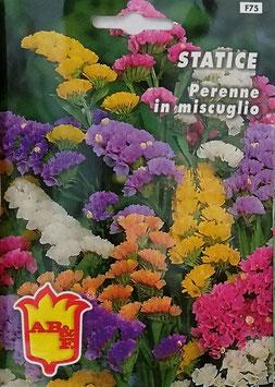 BUSTA STATICE PERENNE MISCUGLIO