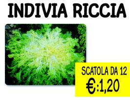 INDIVIA RICCIA 12 PZ