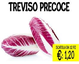 CICORIA DI TREVISO PRECOCE