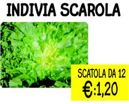 INDIVIA SCAROLA O ROMANA 12PZ