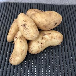 Pommes de terre nouvelle récolte