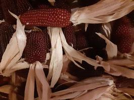 Mini  Erdbeermais/Ziermais