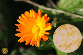 Ringelblume - die Sanfte