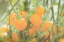 Cherry gelb (ProSpecieRara)
