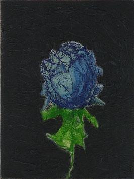 ROSA BLU 40x50