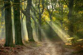 Thema landschap:  Bomen in de mist