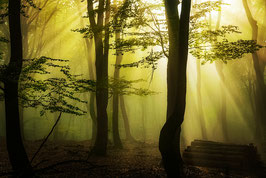 Thema landschap: Magical forest