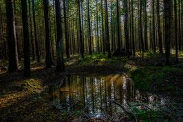 Thema landschap: mystiek bos