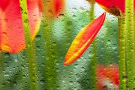 Regentropfen | Echtes Leinenbild