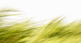 Dünengras | Echtes Leinenbild