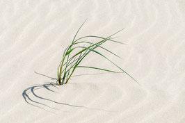 Einsames Strandgras | Echtes Leinenbild