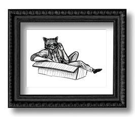 .Cat 'n' Box.