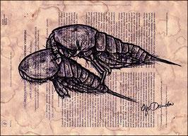 .Terues Tigriopus Postkarte.