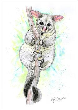 .Possum Postkarte.