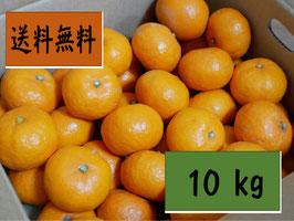 【幻の南濃みかん】箱詰め 10kg