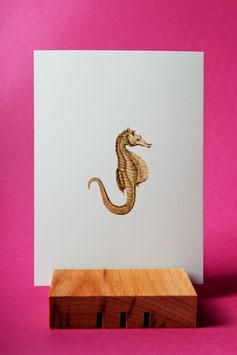 Seepferd - Postkarte